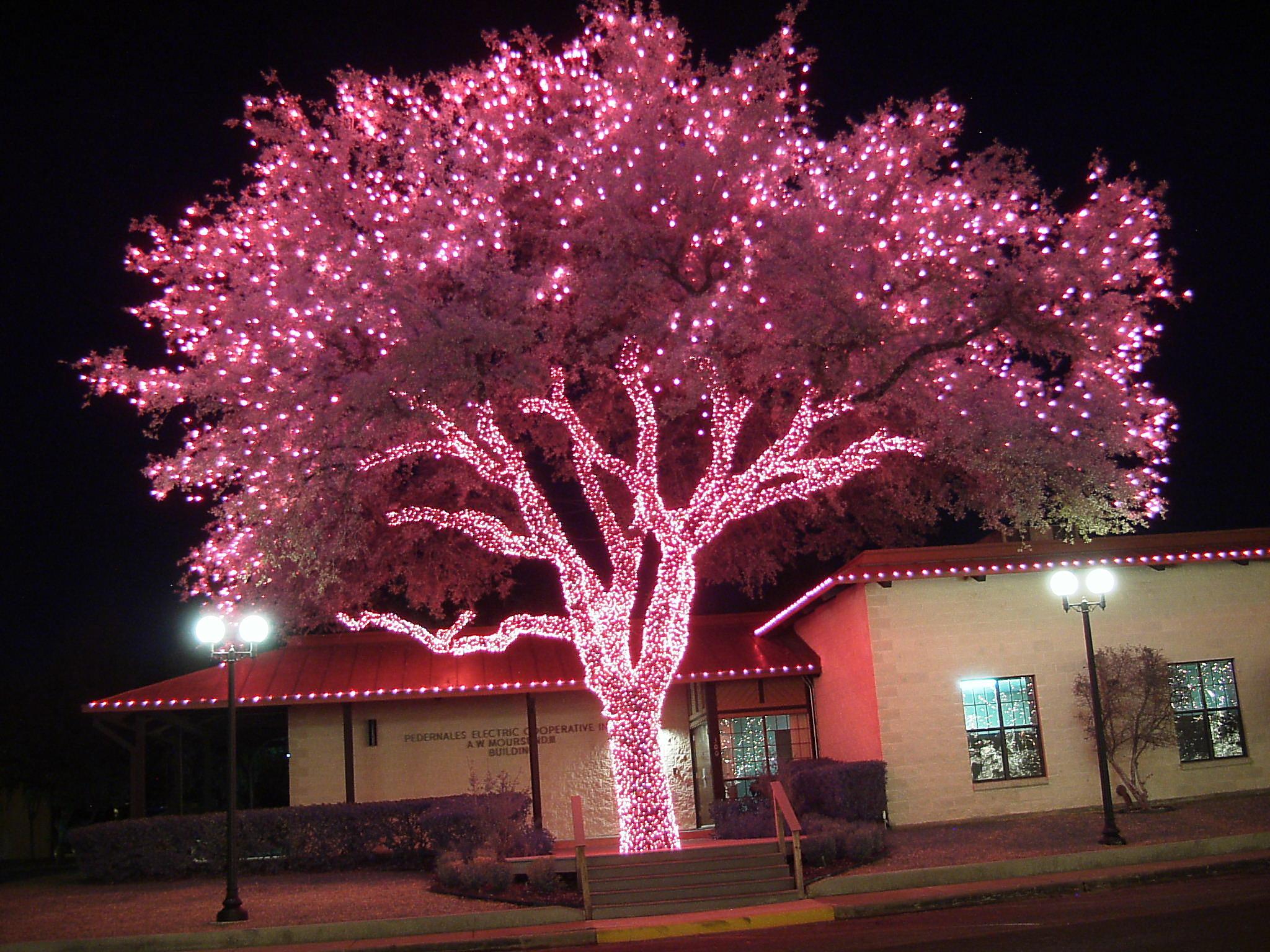 Johnson City & Christmas Lights –